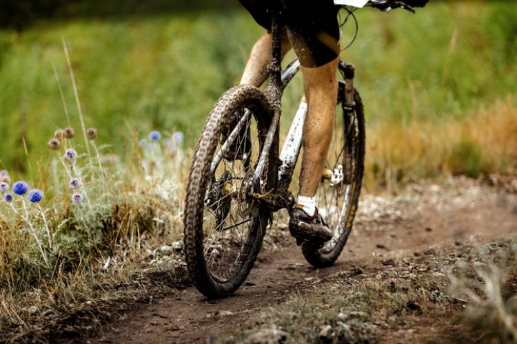 Mountain biker on the trail
